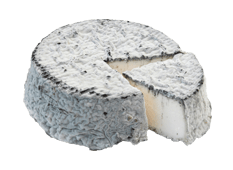 Cheese export - Selles sur Cher