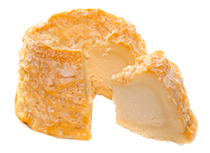 Cheese Export - Langres