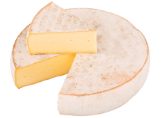 Cheese Export - Saint Nectaire